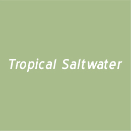 Tropical Saltwater